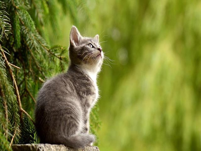 cat-2083492_960_720.png